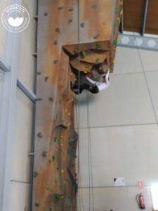 actividades-rocodromo-pabellon-aldeire-5
