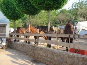 turismo activo - Rutas a caballo