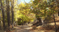 Ruta Aldeire – Horcajo - Área recreativa de La Rosandrá – Barrio Triana - Aldeire